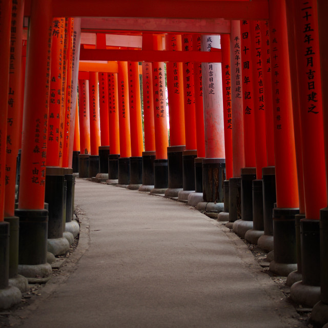 """""""Tunnel of Spirits"""" stock image"""