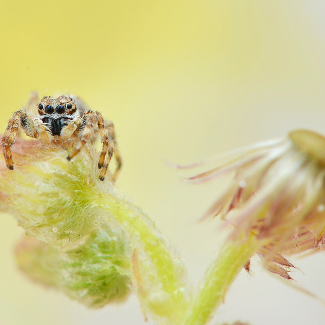 """Little Spider in The Garden"" stock image"