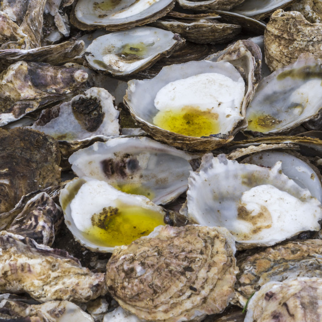 """Oysters"" stock image"