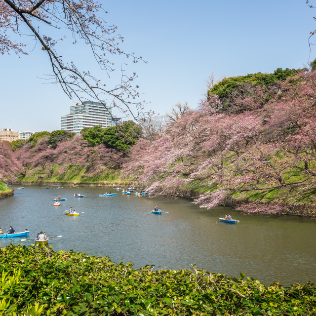 """Cherry Blossom's Tokyo"" stock image"