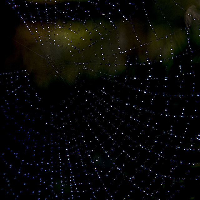 """Spider webs"" stock image"