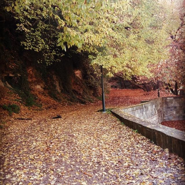 """Autumn"" stock image"