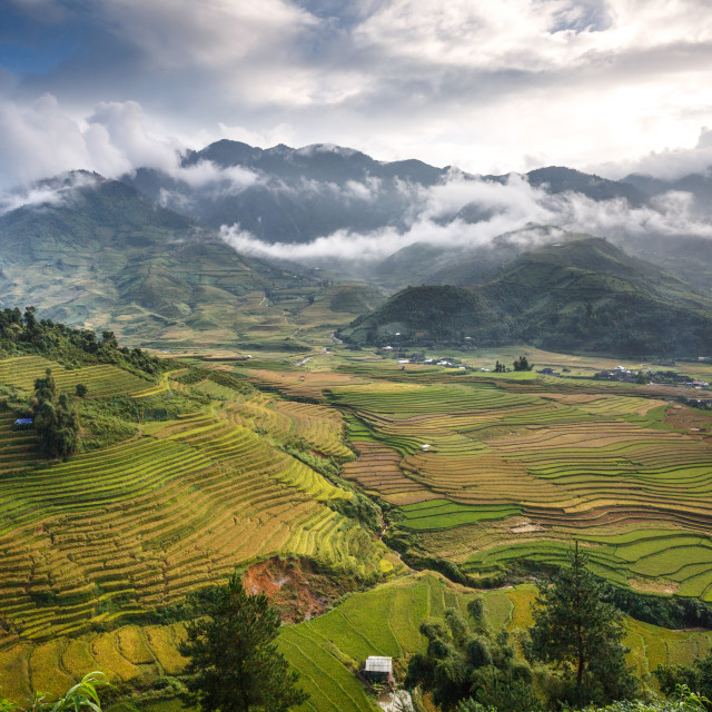 """Terraced rice field in Mu Cang Chai"" stock image"
