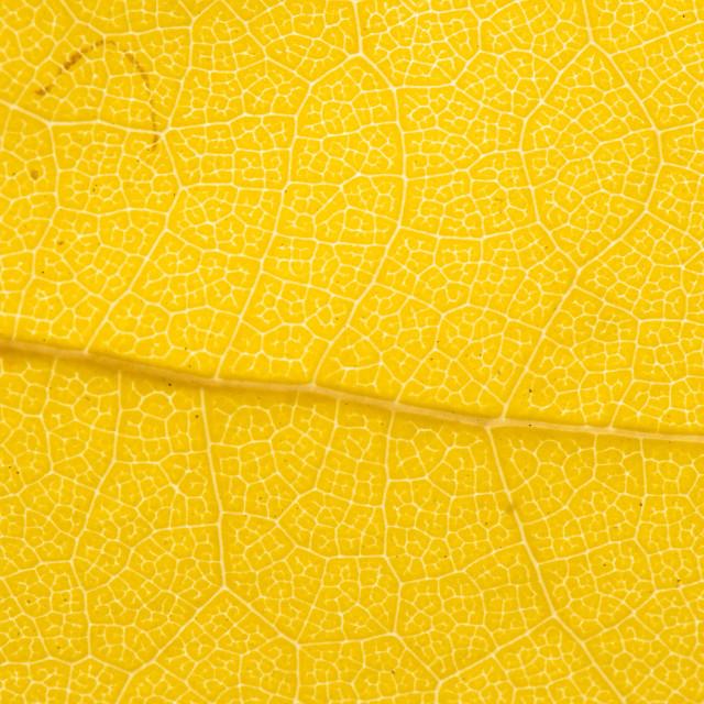 """Fall Leaf Close Up 19"" stock image"