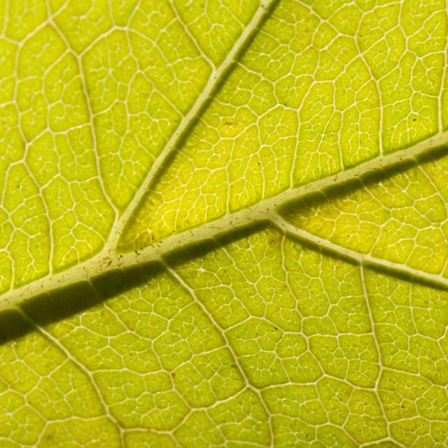 """Fall Leaf Close Up 14"" stock image"