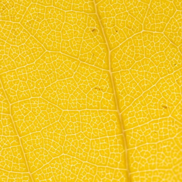 """Fall Leaf Close Up 21"" stock image"