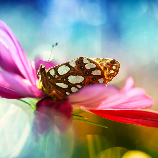 """Butterfly from my garden"" stock image"