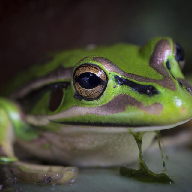 """""""Frog Slime"""" stock image"""