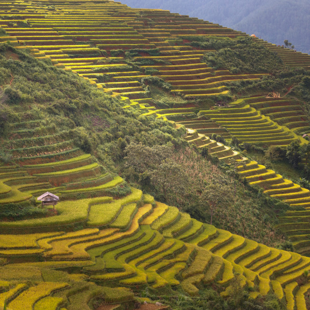 """Terraced rice field in Mu Cang Chai, Yen Bai province in Vietnam"" stock image"