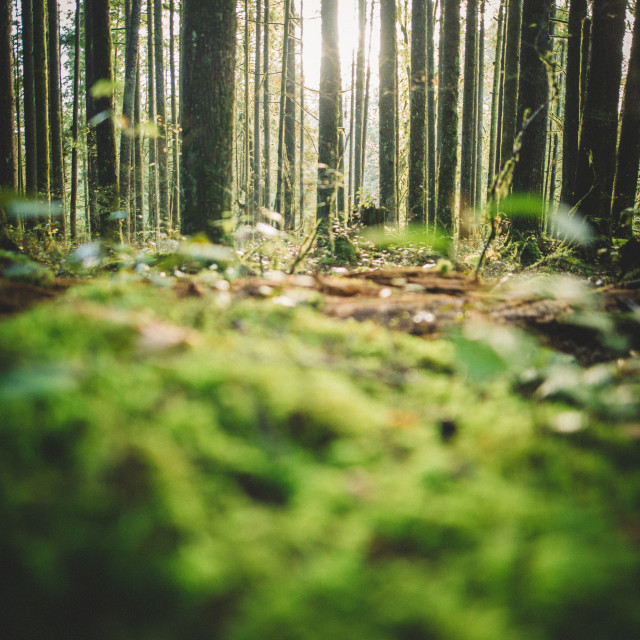 """""""Forest and Grass"""" stock image"""