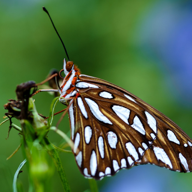 """"" Beautiful Butterfly """" stock image"