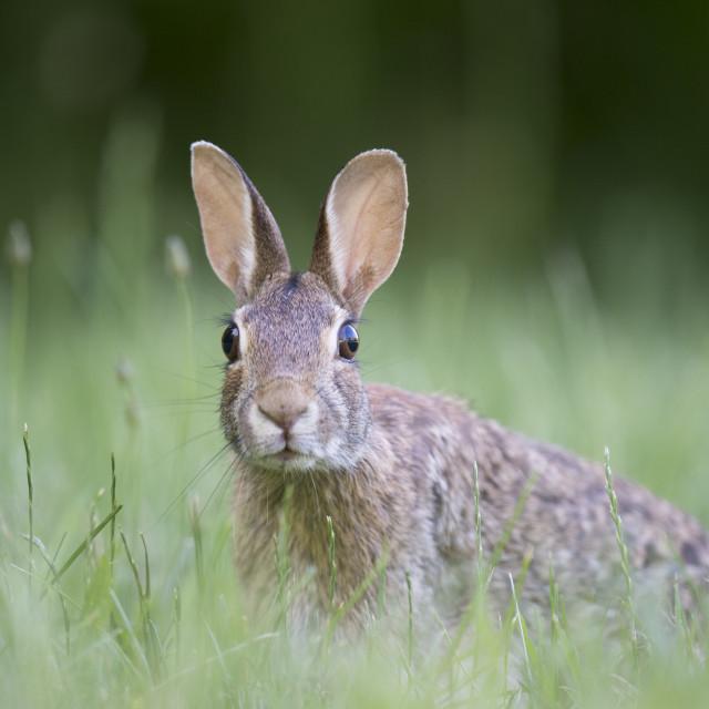 """Alert Rabbit"" stock image"