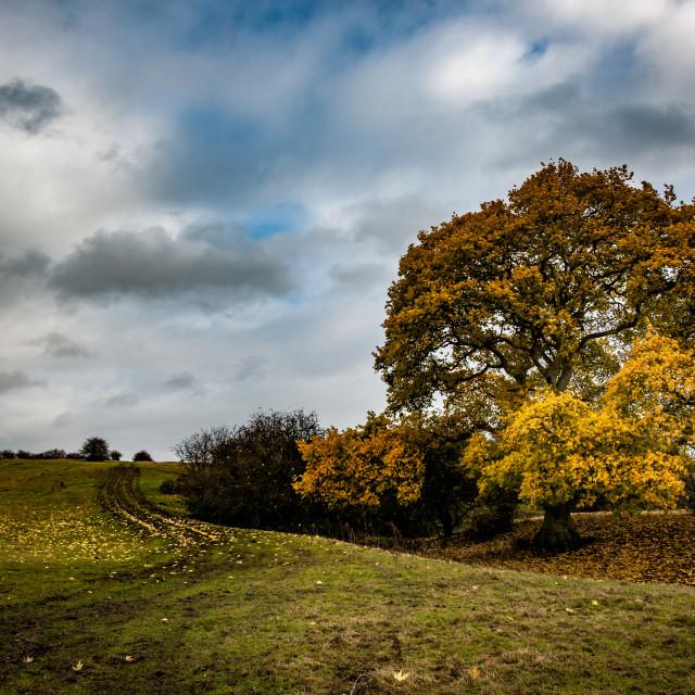 """Tree in autumn"" stock image"