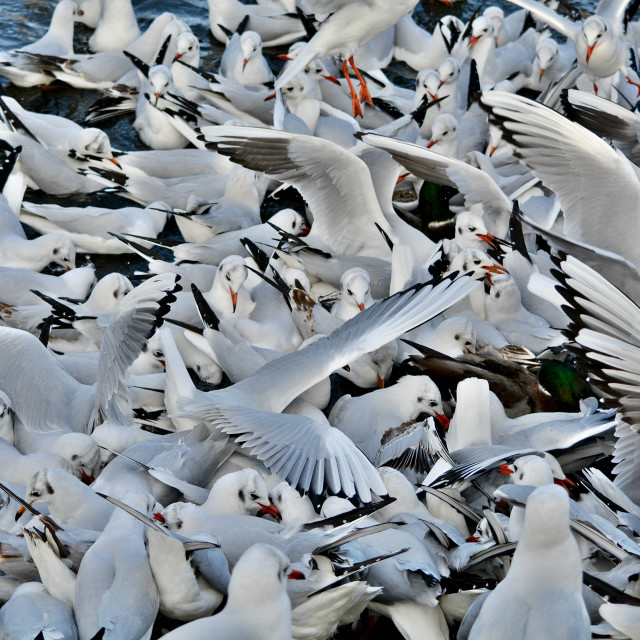 """Gulls Galore"" stock image"