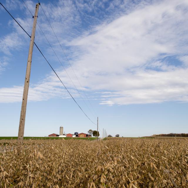 """""""Soybean Farm Field"""" stock image"""