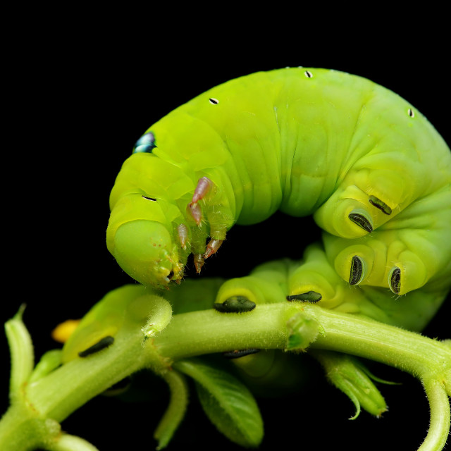 """Chubby Caterpillar"" stock image"