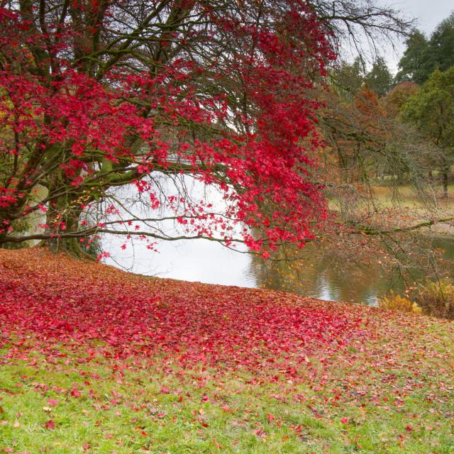 """Autumn at Stourhead"" stock image"