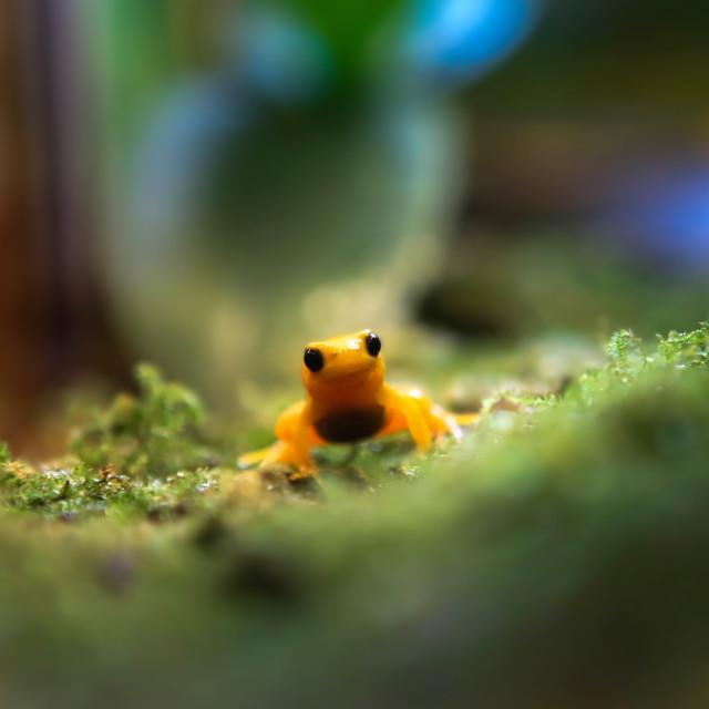 """Tiny Frog"" stock image"