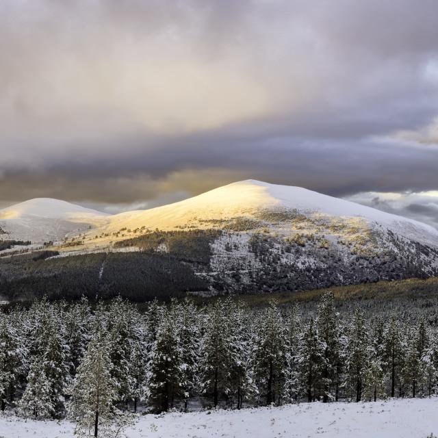 """Glenmore in Winter - Cairngorm National Park"" stock image"