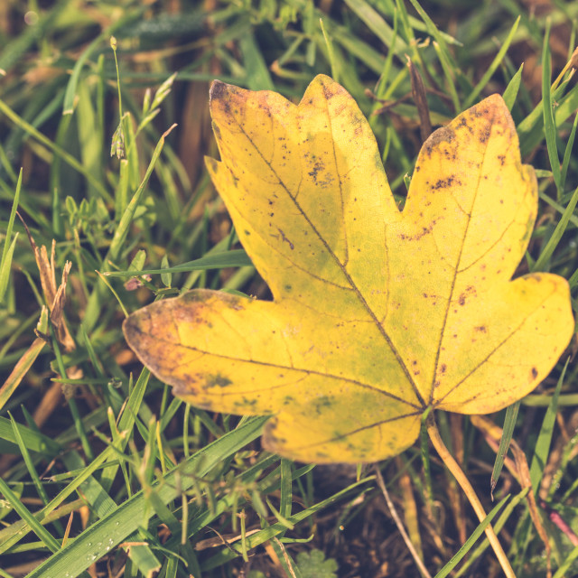 """Leaf on grass"" stock image"