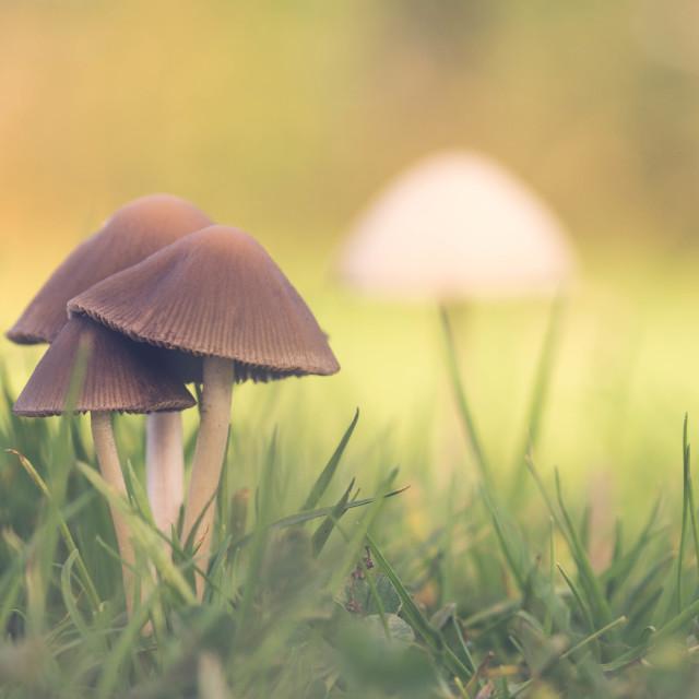 """Autumn Mushrooms"" stock image"