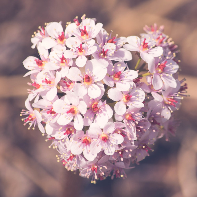 """Heart Shaped Flowers"" stock image"