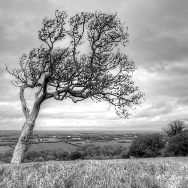 """""""Belstone, Dartmoor"""" stock image"""