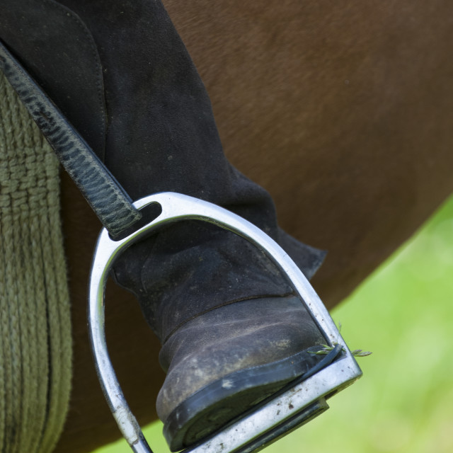 """Dressage rider and horse closeup boot in stirrup detail"" stock image"