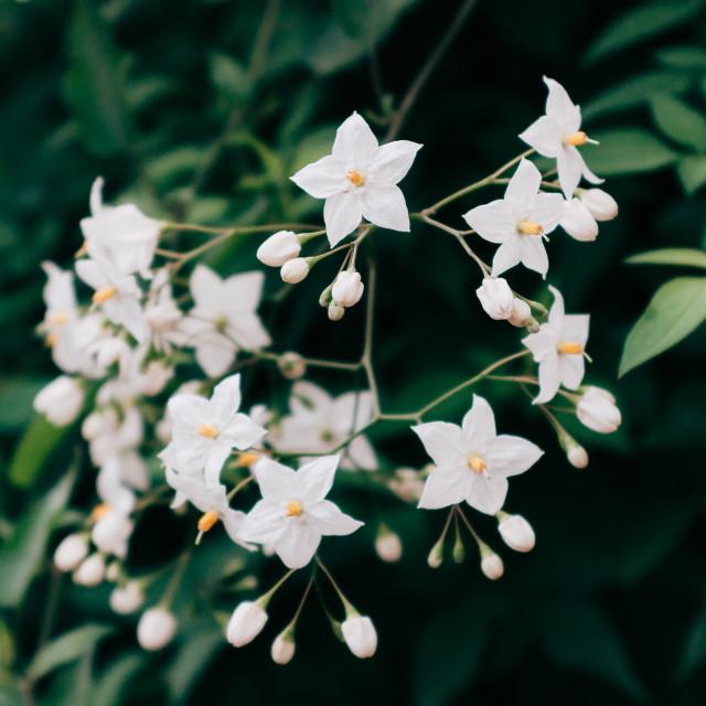 """London Garden Blossom"" stock image"