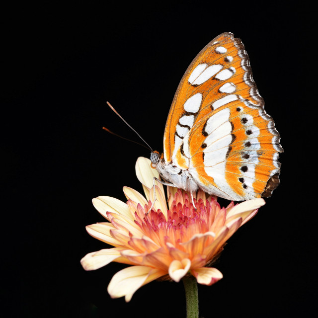 """""""My Sweet Butterfly"""" stock image"""