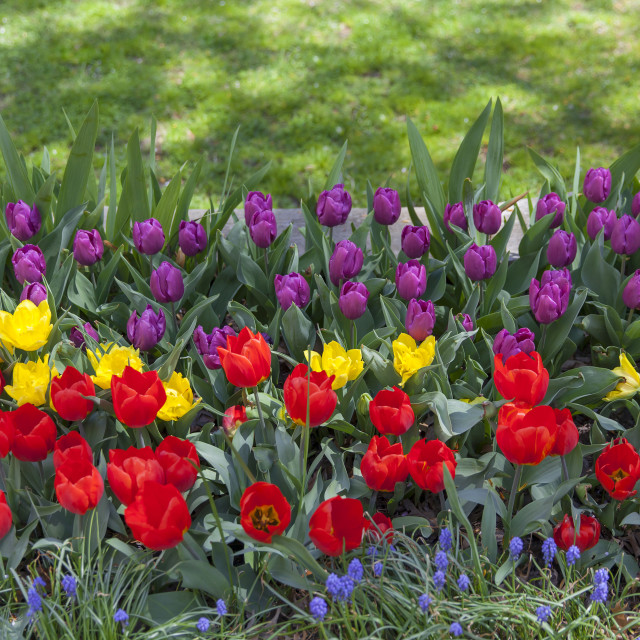 """Pretty spring flowers in the garden as rainbow"" stock image"