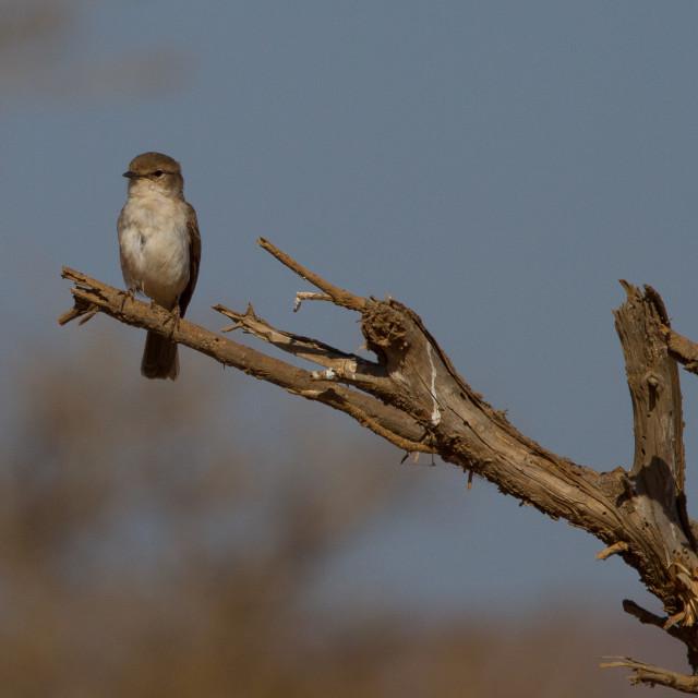 """""""Madikwe Game Reserve"""" stock image"""