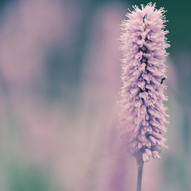 """""""Meadow in pastel colors"""" stock image"""