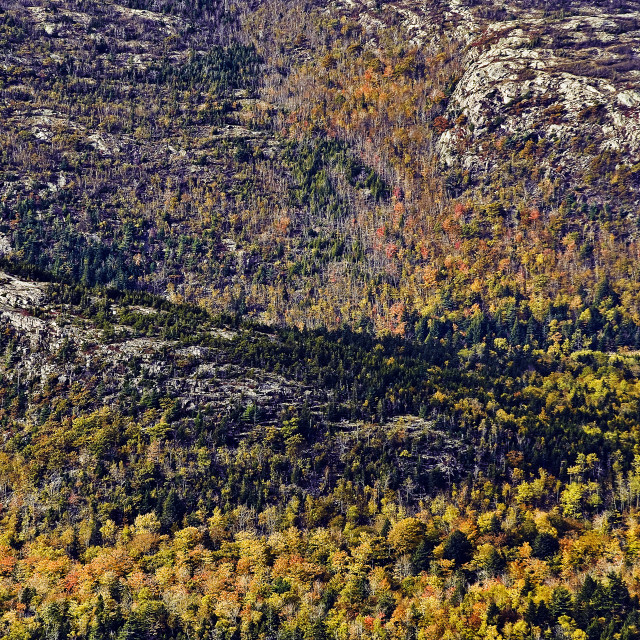 """Tapestry of autumn foliage, Acadia National Park, Maine, USA."" stock image"