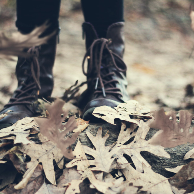 """""""Winter, but still looking like fall."""" stock image"""