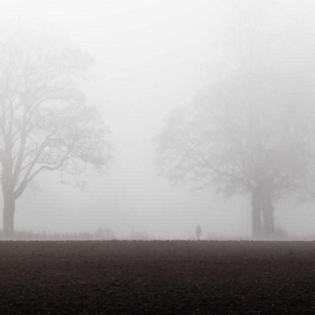 """""""Fog Walker"""" stock image"""