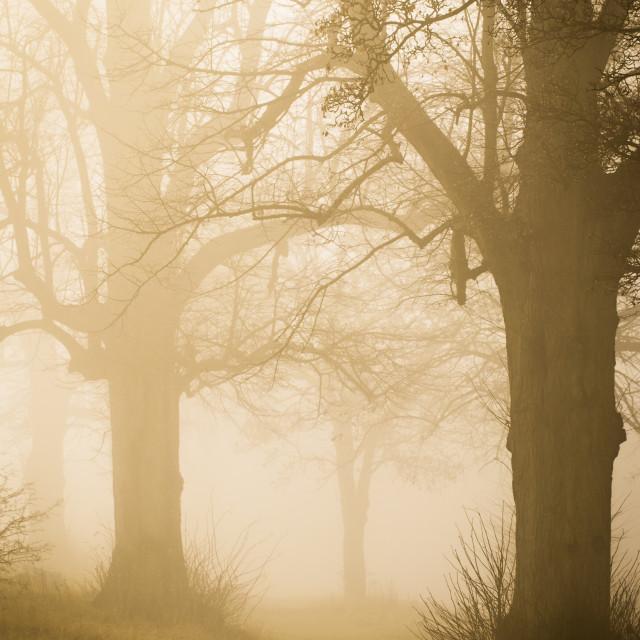 """The Fog"" stock image"