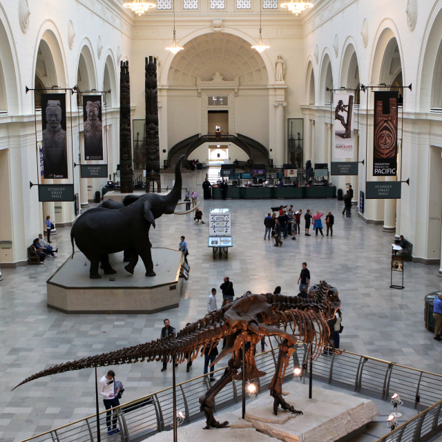 """""""Field Museum, Chicago"""" stock image"""