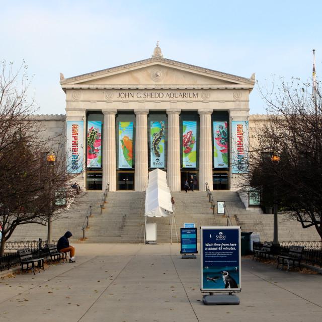 """""""Shedd Aquarium, Chicago"""" stock image"""