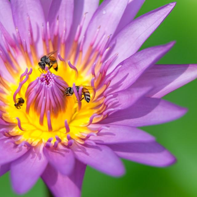 """Close-up flower"" stock image"