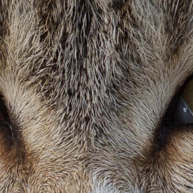 """Feral Cat, Tiberius, Northern Israel"" stock image"
