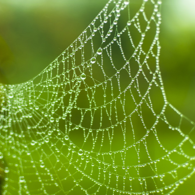 """water web"" stock image"