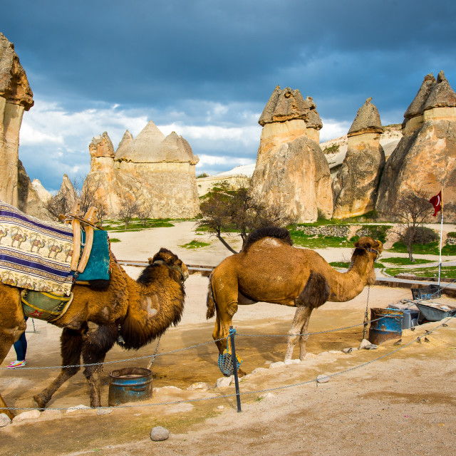 """Camels and Fairy Chimneys"" stock image"