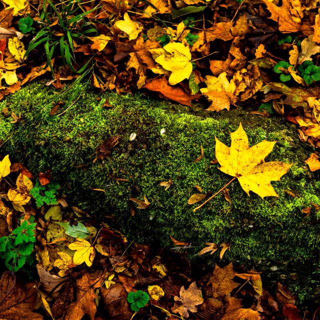 """Fallen leaf"" stock image"