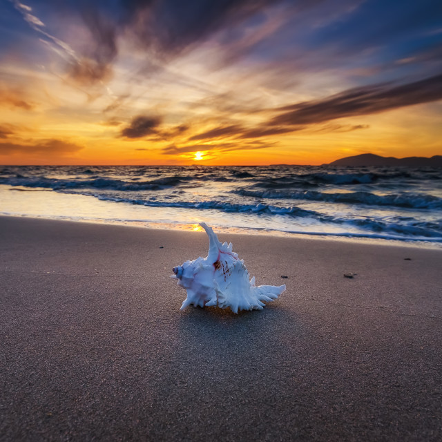 """Shell in the beach"" stock image"