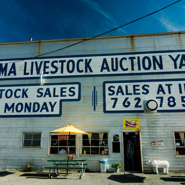 """Livestock Auction Yard"" stock image"