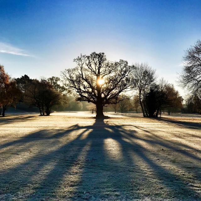 """Winter morning sun"" stock image"