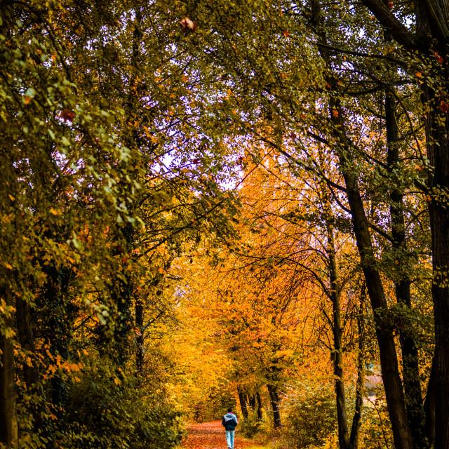 """Autumn alley"" stock image"