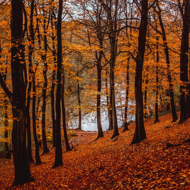 """Gledhow Woods, Yorkshire"" stock image"
