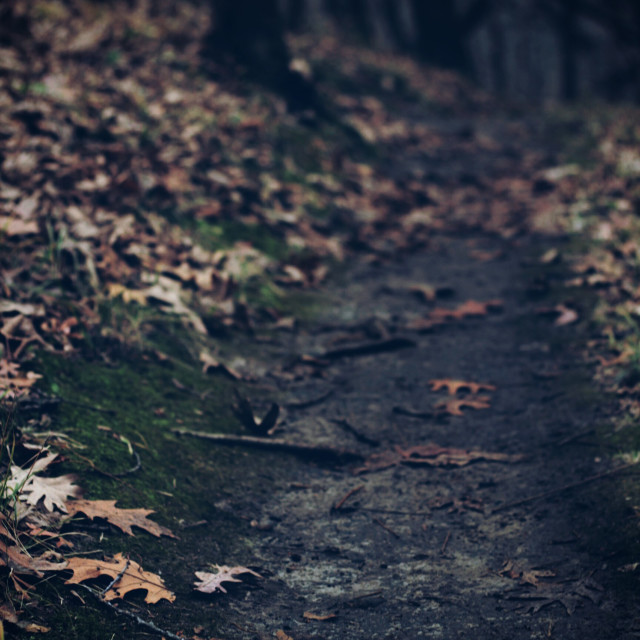 """""""Into the woods"""" stock image"""